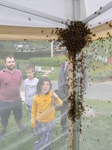 Bee Market 2019_011